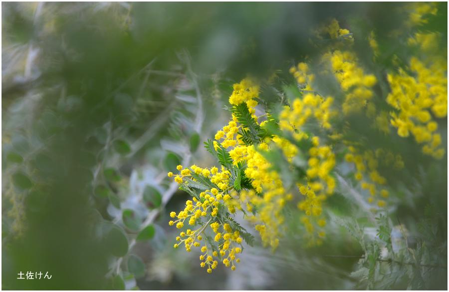 京都府立植物園1