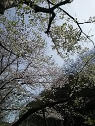 170415_0406の花見