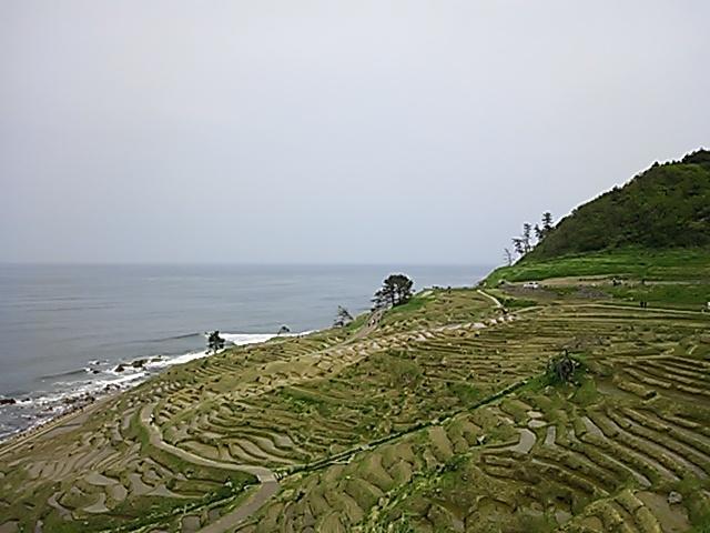 白米千枚田201605-1
