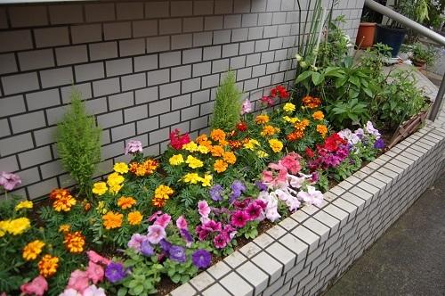 あさりちゃん 花壇植え替え監督中03