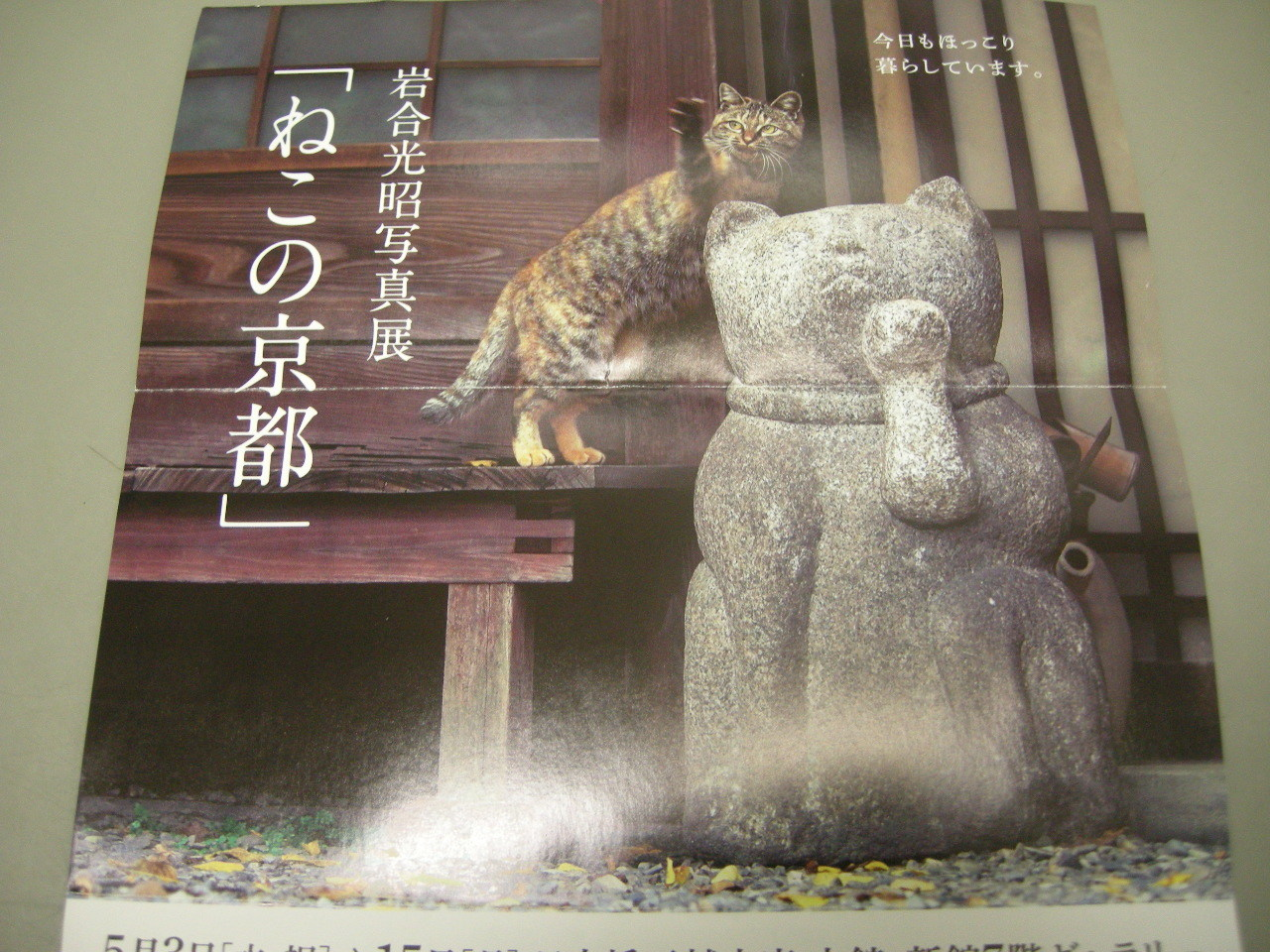 岩合さん写真01