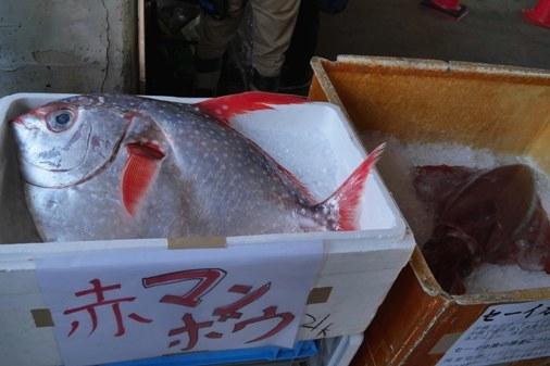 魚祭g P1070779