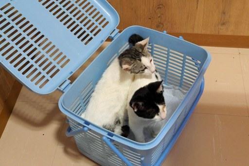 子猫受診 P1090414