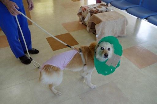 動物病院 P1090417