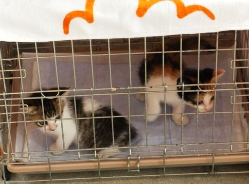 P1090557 - 2子猫