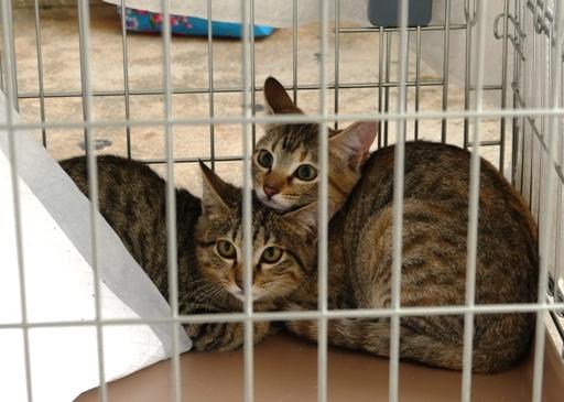 P1090570 - 2子猫