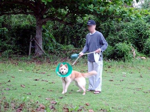 久晴公園散歩 DSC07062