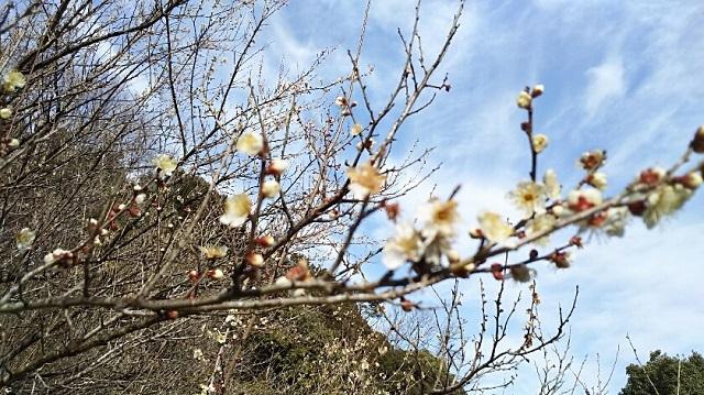 170216 鬼ノ城山㉔ ブログ用