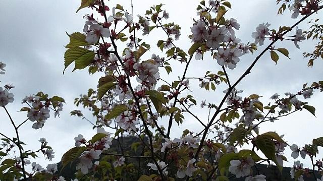 170503 那岐山~滝山㊳ ブログ用