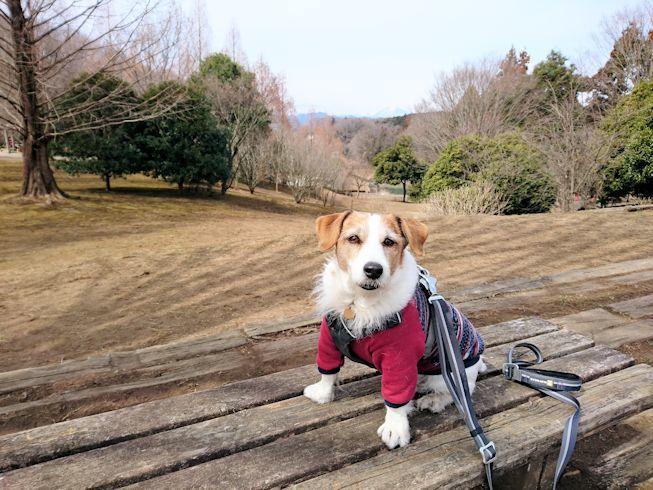 2017長岡公園059