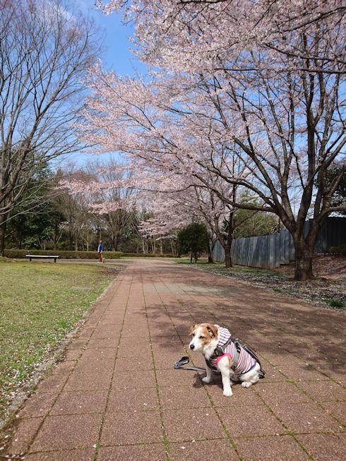 2017長岡公園086