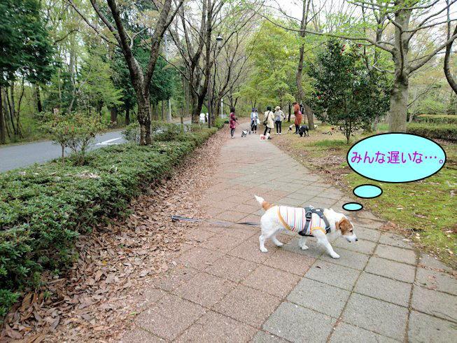 2017長岡公園091