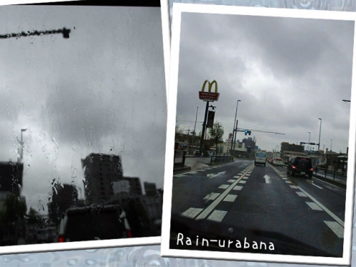 雨ですがね (・ ・)