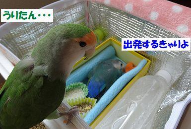 うり様お別れ会7