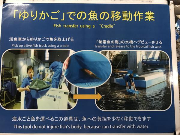 170306魚の移動