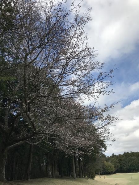 170407美野里桜