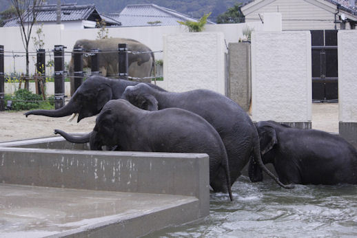 '17.4.15 elephants 6679