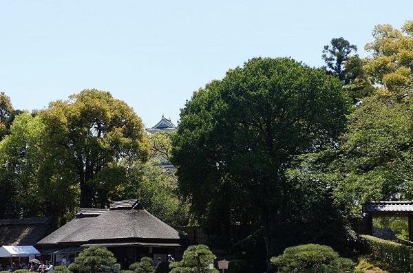 簾池軒に向かう園路からは、烏城が望めます
