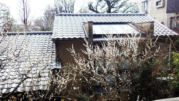 林芙美子記念館の梅とアトリエの屋根