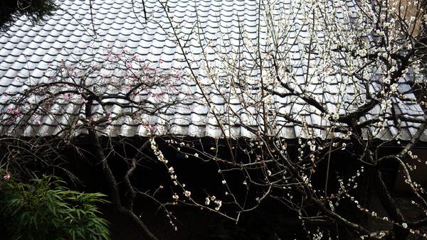 購買と屋根