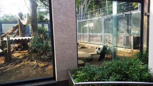 並んで入りパンダに会えた