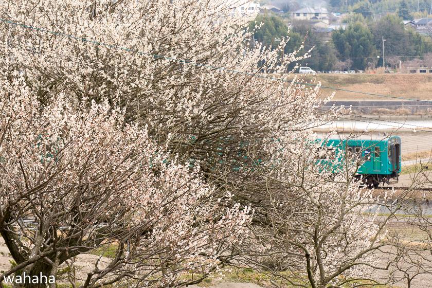 290318kakogawasen-1.jpg