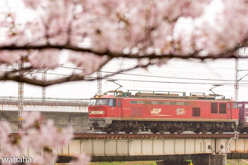 290408ichikawa-2.jpg