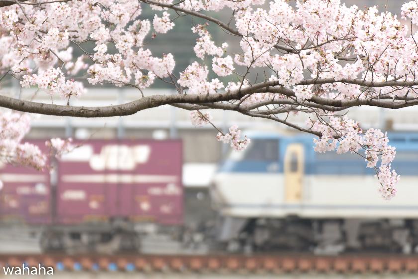 290408ichikawa1-1.jpg