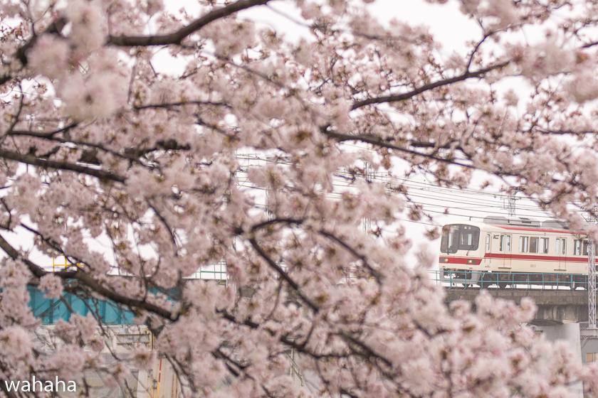 290408sintetsu_minogawa-2b.jpg