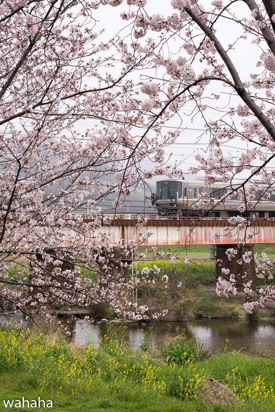 290408yumesakigawa-2.jpg