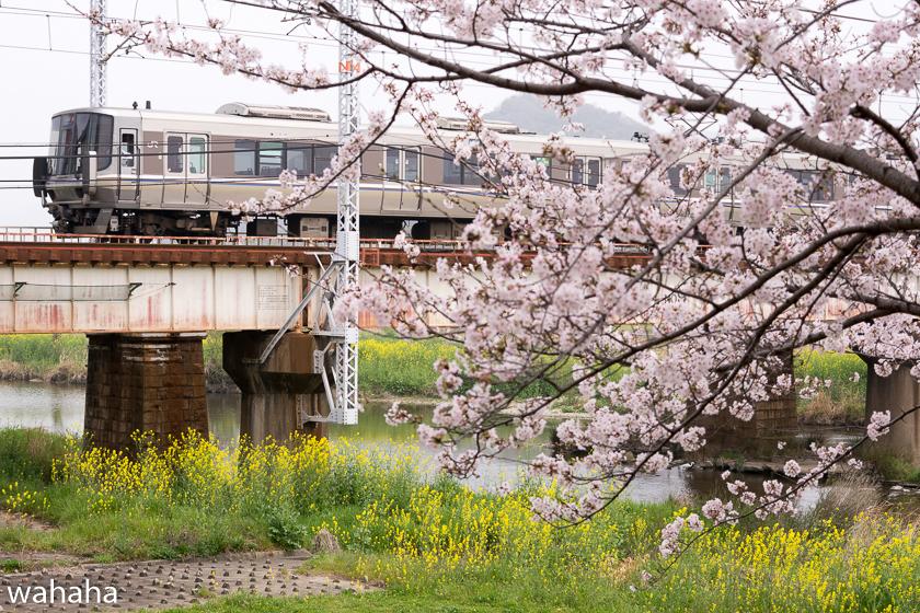 290408yumesakigawa-3.jpg