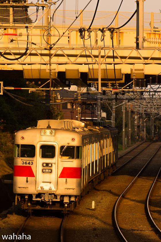 290421maikokouen-1.jpg