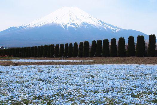 ネモフィラと富士山
