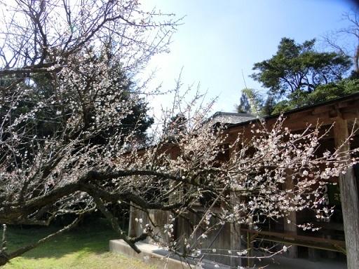 2017-02-27 garyu-bai2
