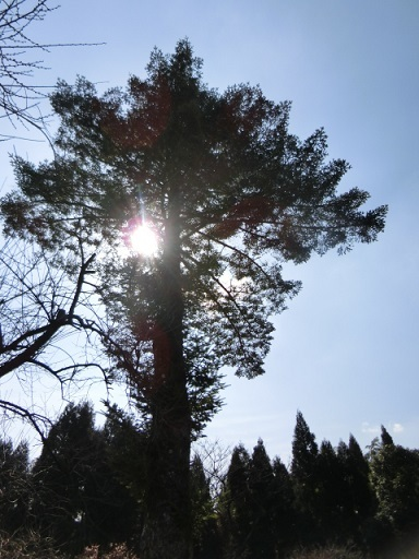 藤川天神にはいい感じの巨木が多くて素敵スポットです。臥龍梅の花の時期でない時期もいいところですよー!!
