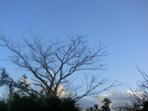 2017-03-09 tree