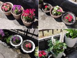 花の鉢植え20170423