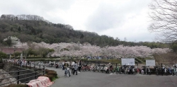 鏡山公園桜が満開20170409-01