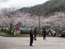 鏡山公園桜が満開20170409-03