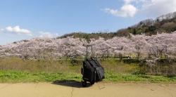 鏡山公園でアコーディオン20170412-01