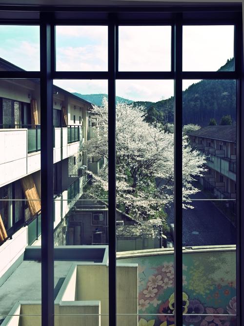 cherry_blossom_17_4_15_2.jpg