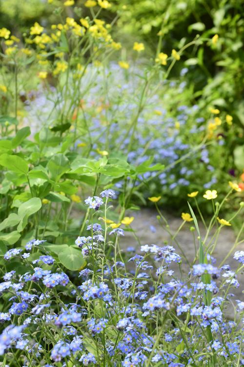 flowers_17_5_1.jpg