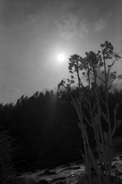 深山幽谷135a