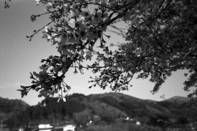 深山幽谷138b