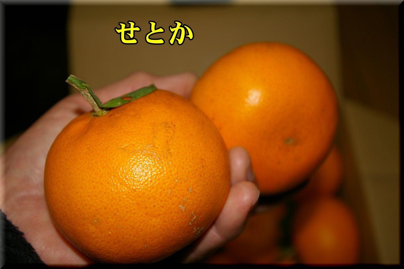 1DC170222_003.jpg