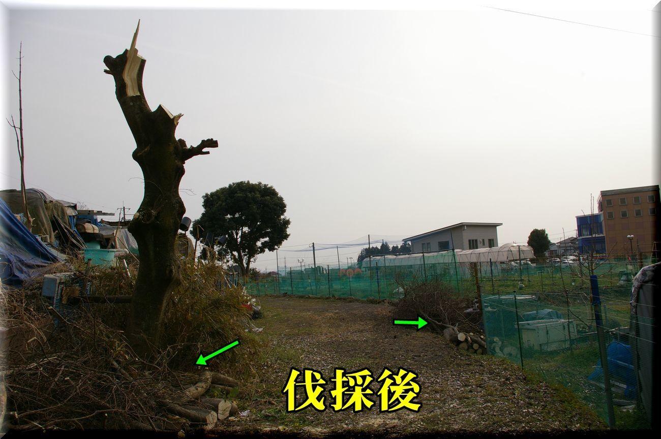 1DC170320_007.jpg