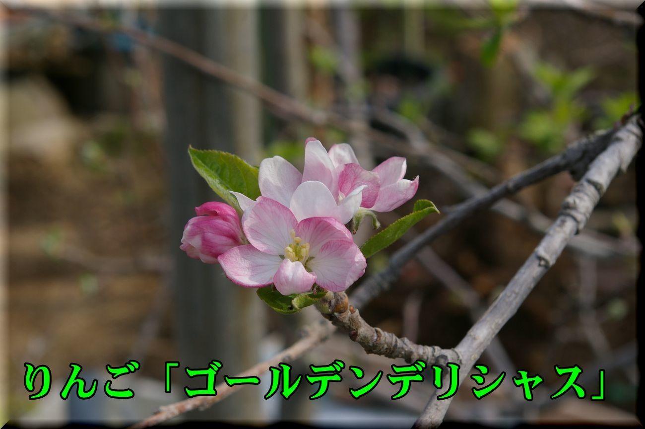 1Gdeli170416_011.jpg
