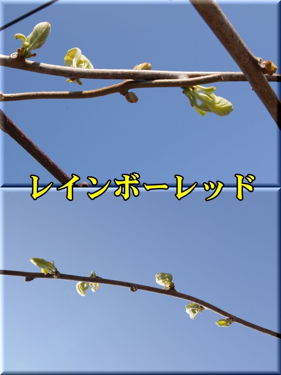 1RR170328_003.jpg