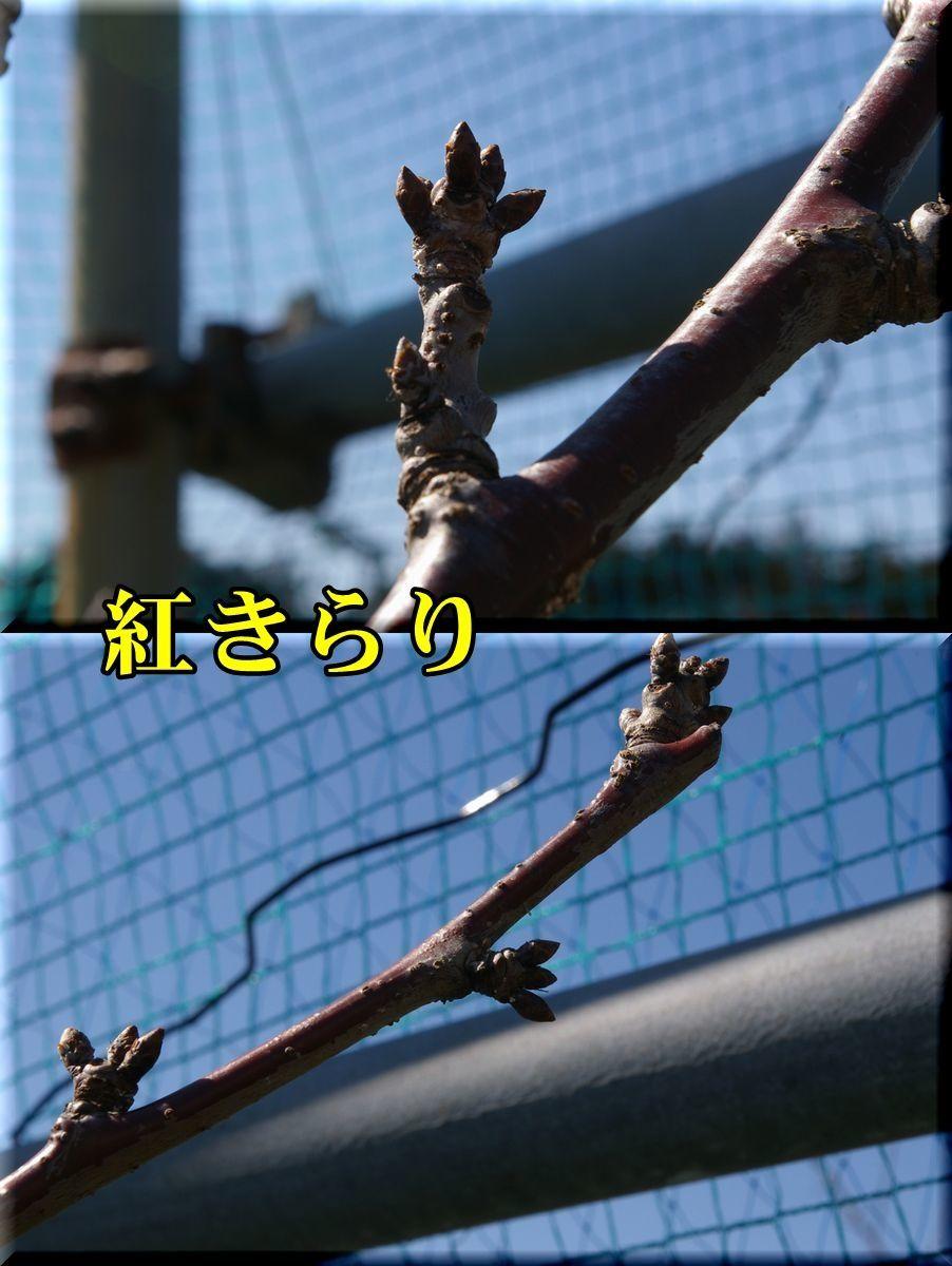 1benikirari170219_024.jpg