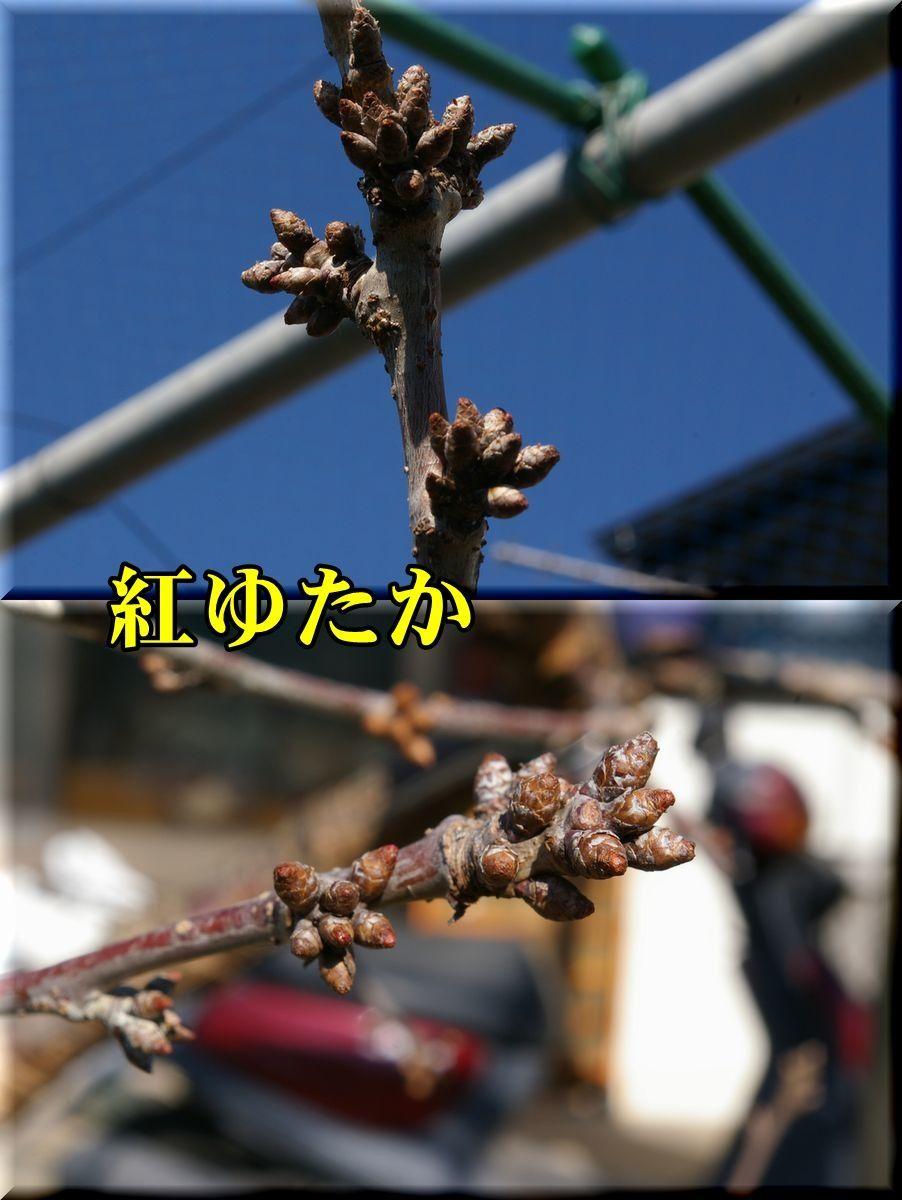 1beniyutaka170219_017.jpg